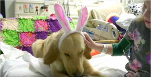 Os cães deixam os momentos no hospital mais leves e recebem muito carinho das crianças. (Foto: Reprodução / I Heart Dogs)