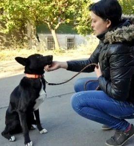 Nina conseguiu ensinar alguns comandos para Shavi. (Foto: Reprodução / Life With Dogs)