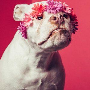 Pink teve sorte por conseguir um lar tão amoroso e cuidadoso de forma rápida. (Foto: Reprodução / Robyn Arouty Photography)