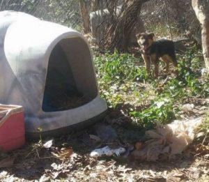 Filhote vivia com mais três cães no quintal da casa, que vivia sujo, com lama e sem nenhum conforto. (Foto: Reprodução / Dogs Deserve Better)