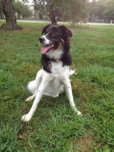 Depois de ser levado para os EUA, o cão se recuperou muito bem, se adaptou a nova condição e ganhou novamente peso e pelos. (Foto: Reprodução / Tod Emko Darwin Animal Doctors)