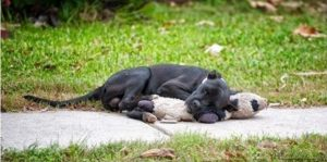 A imagem pode até ser fofa, mas também é de cortar ao coração. (Foto: Reprodução / Yvette Holzbach / Forgotten Dogs of the 5thWard)