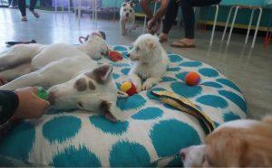 Os cães ficam pela cafeteria, passeando em maio aos clientes. (Foto: Reprodução / The Dog Cafe)