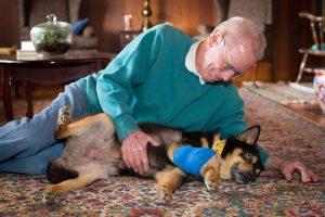 O homem e sua esposa estão dando um final de vida feliz e cheio de amor para Marcie. (Foto: Reprodução / Shelter Dog Photography)