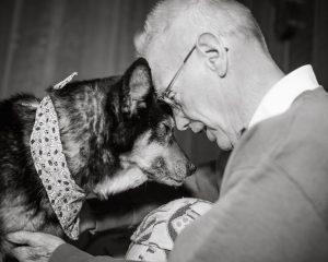 Voluntário de abrigo resolveu levar o cão idoso e doente para a sua casa. (Foto: Reprodução / Shelter Dog Photography)