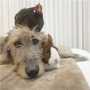 Todos os animais foram resgatados ou adotados por Greig. (Foto: Reprodução / Instagram Wolfgag2242)