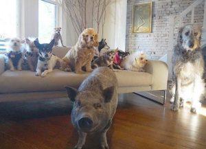 Greig tem em sua casa animais de diferentes espécies. (Foto: Reprodução / Instagram Wolfgag2242)