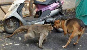 A macaca também defende o cãozinho como uma verdadeira mamãe. (Foto: Reprodução / ZeeNews)