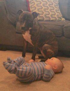 Maxie se tornou a melhor babá que os pais poderiam querer. (Foto: Reprodução / Second Chance Rescue NYC Dogs)