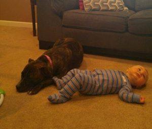 Apesar de ainda não se dar bem com outros cães, Maxie é muito amorosa e cuidadosa com humanos. (Foto: Reprodução / Second Chance Rescue NYC Dogs)