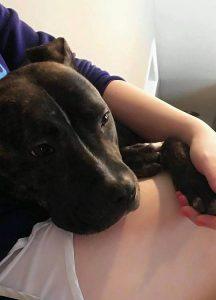 Maxie é um cão doce e uma ótima companheira. (Foto: Reprodução / Second Chance Rescue NYC Dogs)