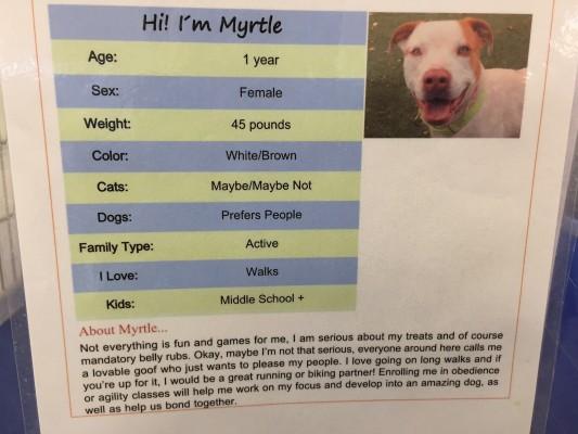 Descrição de uma cachorra disponível para adoção na Arizona Animal Welfare League & SPCA (Foto: Reprodução / BarkPost)