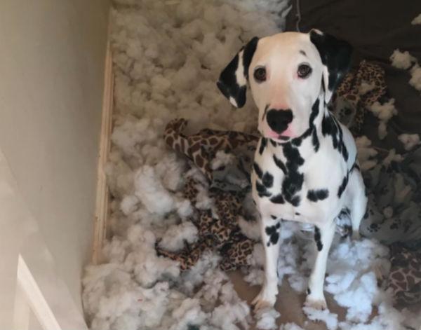 Os cães devem ser incentivados a destruir seus próprios brinquedos. (Foto: Reprodução / Bark Post)