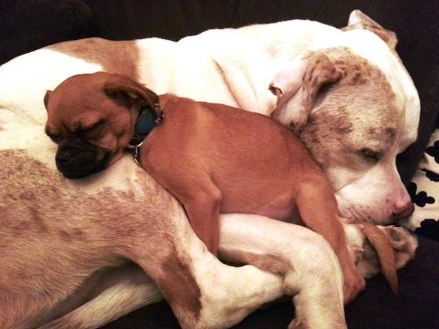 Charlie ajuda cães resgatados. (Foto: Reprodução / The Dodo)