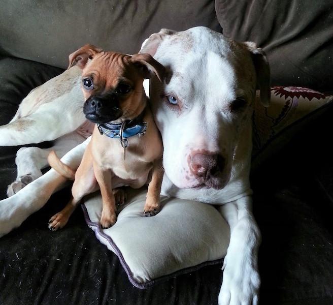 Charlie oferece todo seu carinho para cães abandonados. (Foto: Reprodução / The Dodo)