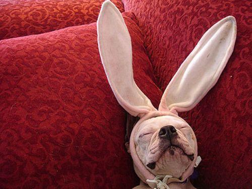 (Foto: Reprodução / Dog Vacay)