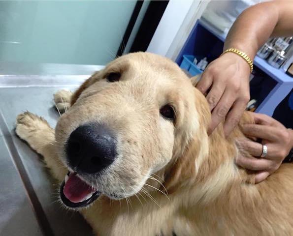 O cão ficou com o focinho inchado. (Foto: Reprodução / Facebook / Natthathida Nilbut)