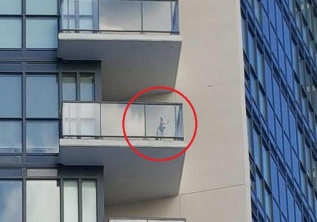 O cachorro foi visto do lado de fora do apartamento em um dia muito frio. (Foto: Reprodução / The Dodo)
