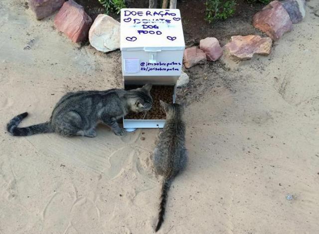 Os animais têm acesso à água e comida graças ao projeto. (Foto: Reprodução / Facebook / Jeri Sobre Patas)