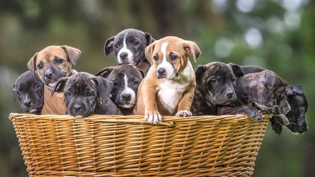 Todos encontraram um lar. (Foto: Reprodução / Bark Post)