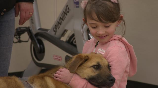 A menina conheceu a cachorra Arrow. (Foto: Reprodução / CBC Canadá)