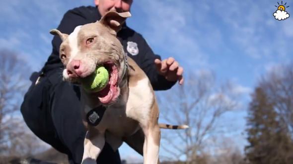 A cachorro policial Kiah com seu companheiro de trabalho. (Foto: Reprodução / Life With Dogs)