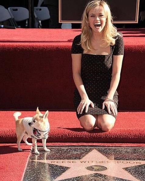 A atriz recebendo a estrela na calçada da fama acompanhada pelo chihuahua. (Foto: Reprodução / Instagram)