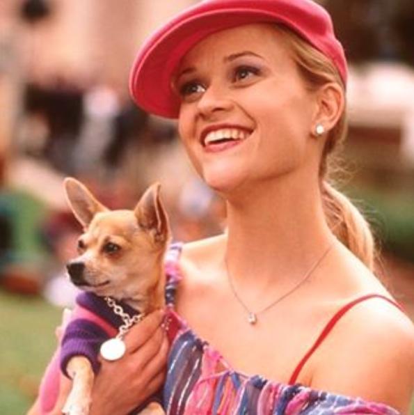 """Reese Witherspoon com o cão Moonie no filme """"Legalmente Loira"""". (Foto: Reprodução / Instagram)"""