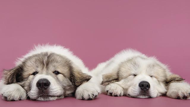 serie-cachorros-juntos-02