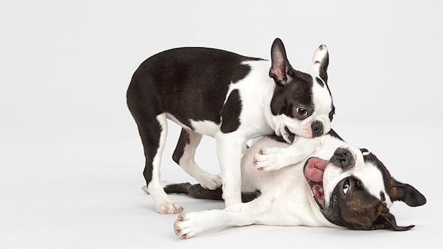 serie-cachorros-juntos-032