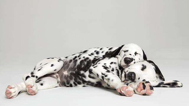 serie-cachorros-juntos-04