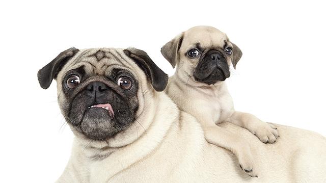 serie-cachorros-juntos-05