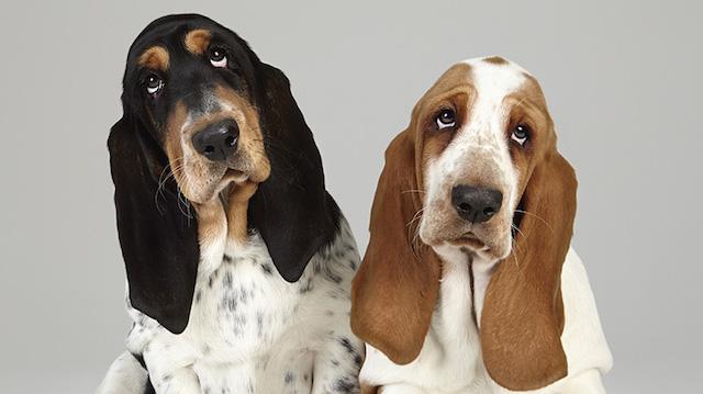 serie-cachorros-juntos-08