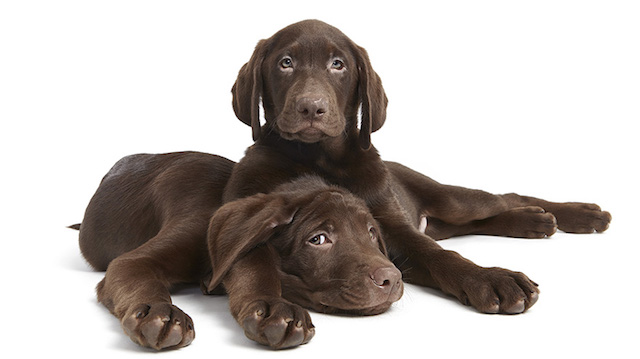 serie-cachorros-juntos-09