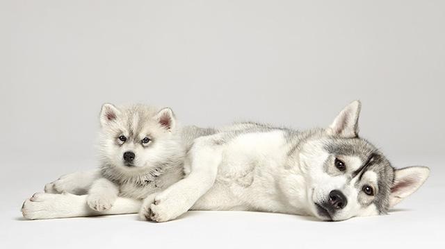 serie-cachorros-juntos-10