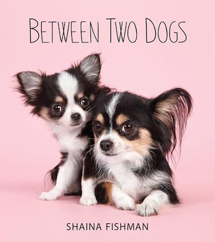 serie-cachorros-juntos-11