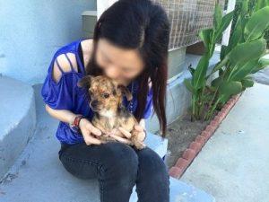 Os cães são levados para serem adotados por pessoas que sofreram algum tipo de violência ou abuso. (Foto: Reprodução / Marc Ching)