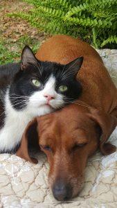A cadela é sempre muito protetora com a gata, que possui problemas de locomoção. (Foto: Reprodução/ Jackie Borum)