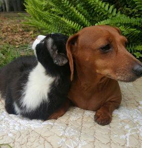 Os dois animais foram encontrados juntos e estão sempre um com o outro. (Foto: Reprodução/ Jackie Borum)