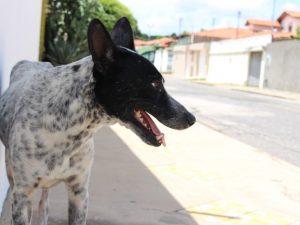 Apesar da ajuda dos vizinhos o cão continua magro e debilitado. (Foto: Reprodução / Fernando Brito / G1)
