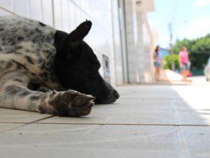 O cão Bidú foi abandonado pelos tutores, que se mudaram e deixaram o animal na rua. (Foto: Reprodução / Fernando Brito / G1)