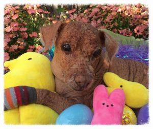 O cão passou por tratamentos, cirurgias e foi adotado. (Foto: Reprodução / Facebook Master Splinter)