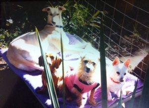 Primeiro Fastfeet foi apresentado aos outros cachorros da casa. (Foto: Joanne Tester)