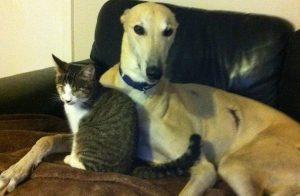 Depois de ser apresentado aos gatos, o cão fez uma amizade especial com o gatinho cego que se recuperava em sua casa. (Foto: Joanne Tester)