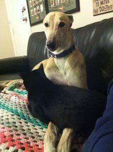 Após Indi ser adotada, Fastfeet passou a distribuir o seu amor com todos os gatos que passam pela sua casa. (Foto: Joanne Tester)