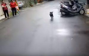 a alegria do cão no momento que viu seu tutor se aproximar. (Foto: Reprodução / Youtube M13)