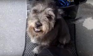 A felicidade do cão ao reencontrar seu tutor. (Foto: Reprodução / Youtube M13)