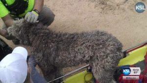 Cão sobreviveu à queda de penhasco de cerca de 45 metros de altura. (Foto: Reprodução / KSL-TV)