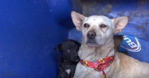 Por tudo o que já tinha passado, a mamãe Zoe era muito desconfiada e arisca protegendo seu único filhote restante. (Foto: Reprodução / Youtube Fope For Paws)