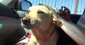 A equipe do Hope For Paws conseguiu fazer o resgate de ambos os cães em segurança. (Foto: Reprodução / Youtube Hope For Paws)